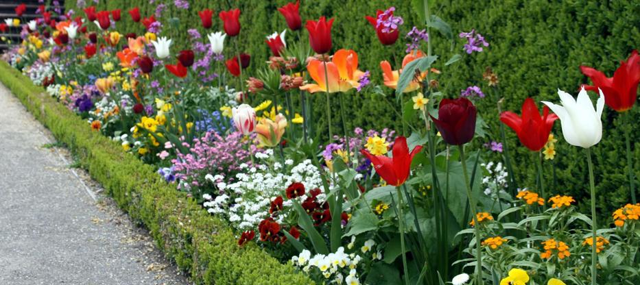 Rokokogarten-Veitshoechheim-Tulpen