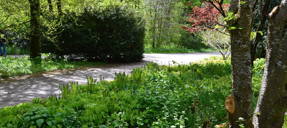 Gaestefuehrer-Gartenerlebnis-Bayern-Tanja-Sixt-Westpar-Muenchen-Japengarten-Schattenbeete