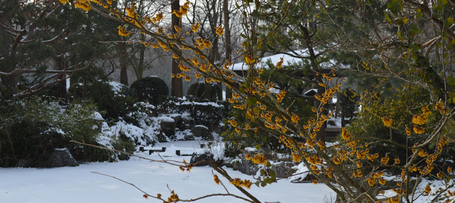 Gaestefuehrer-Gartenerlebnis-Bayern-Tanja-Sixt-Westpar-Muenchen-Japengarten-Winter