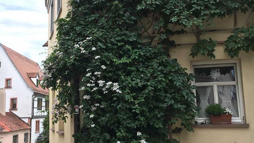 Gartenerlebnis-Bayern-Ulrike-Faust-Clematisdorf-Erlabrunn-Gallery-1