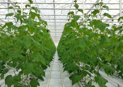 Moderner Gemüseanbau in Albertshofen