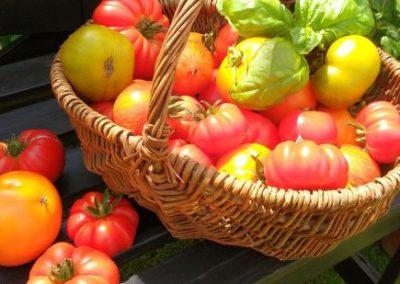 Tomatenverkostung und Saatguttausch